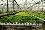Hi-tech agriculture rides strong wave of domestic investment