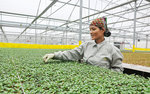 Agriculture urged to automatise with IoT