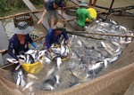 Tap Asia, tra fish exporters told