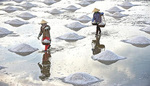 VN seeks opportunity to export salt to Indonesia