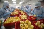 Vegetable, fruit exports to struggle