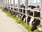 Viet Nam, Australia strengthen livestock breeding ties