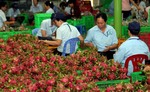 Viet Nam plans to export fruits to Qatar