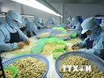 Viet Nam achieves record cashew exports