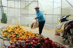 Malaysia suspends chili imports from Viet Nam