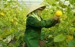 Da Nang eyes hi-tech farms