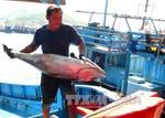 Binh Thuan eyes coastal economy