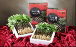 Sprout ginseng festival to take place in Ha Noi from November 16-30