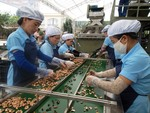 Viet Nam needs to restructure cashew production