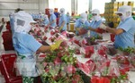 Fruit, vegetable exports up 37% in January