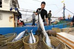 Viet Nam works to stop illegal fishing
