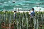 HCMC farm production shoots up