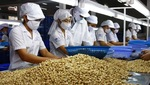 Cashew firms temporarily halt African imports