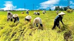 VN, Netherlands to boost agricultural co-operation