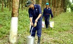Rubber prices fall, firms fret