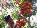 Vietnamese rambutan export to New Zealand announced