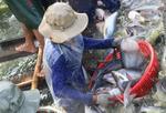 Viet Nam targets $40b farm exports