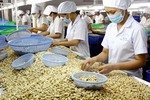 Cashew exports rise strongly in first quarter