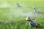 Viet Nam spends $194 million on pesticides