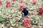 Da Lat vegetable prices plunge