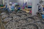 VN to gain $4.8b from shrimp exports