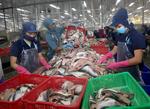 Catfish skin: a promising export