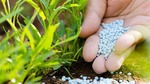 Domestic fertiliser struggles to compete
