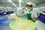 Ha Long to host 10th international cashew conference