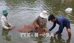 Seminar considers measures for development of shrimp farming