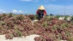 Ly Son Islands break Japan market