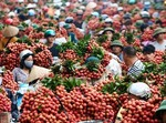 Ha Nam to witness high-tech agricultural products