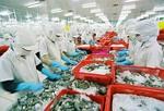 VASEP urges Gov't to protect Viet Nam shrimp