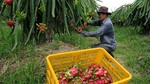 US continues to be key export market for Viet Nam