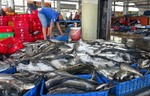Fisheries sector strives to meet EC's requirements