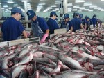 China ripe market for local tra fish exporters