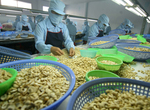 Cashew producers seek more credit from banks