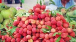 Lychee export value increases 126 per cent this year