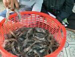 Experts discuss shrimp demand