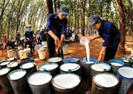 Rubber stocks rise on global prices