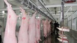 A number of cattle slaughterhouses to be launched