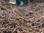 Cassava industry faces big hurdles
