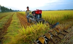 Labour training for Mekong Delta's agricultural sector should be improved