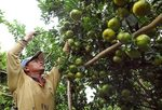 Mekong Delta needs to be innovative to overcome climate change: experts