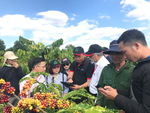Global NESCAFÉ Plan initiative contributes to sustainability of Vietnamese coffee farming