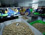 Viet Nam strives for $4 billion in cashew exports next year