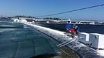 Central province debuts nano-tech shrimp farms