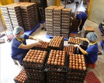 Quotas set for salt, eggs