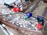 Tra fish industry needs to improve product quality