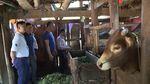 Ha Giang beef accredited