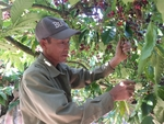 Viet Nam coffee exports plummet on global headwinds